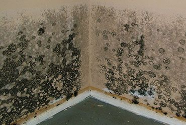 Mold Cleanup in Cabazon, CA (7889)