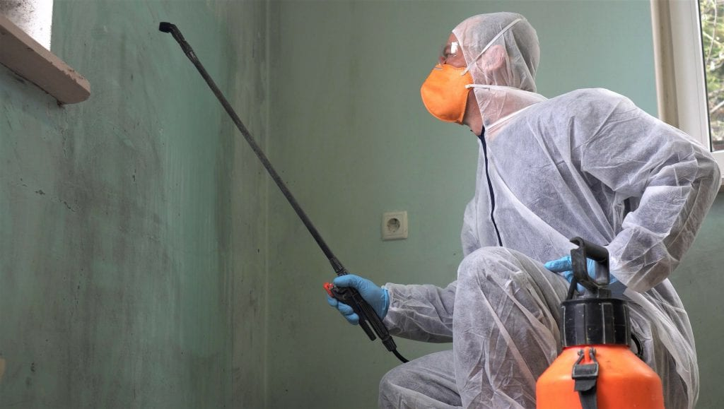 Mold Removal in Banning, CA (1283)