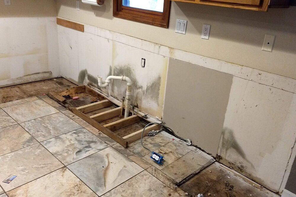Mold Removal in Indian Wells, CA (638)