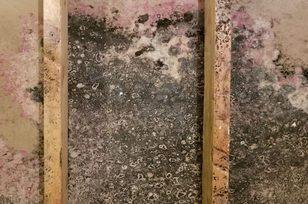 Mold Removal in Indian Wells, CA (5695)