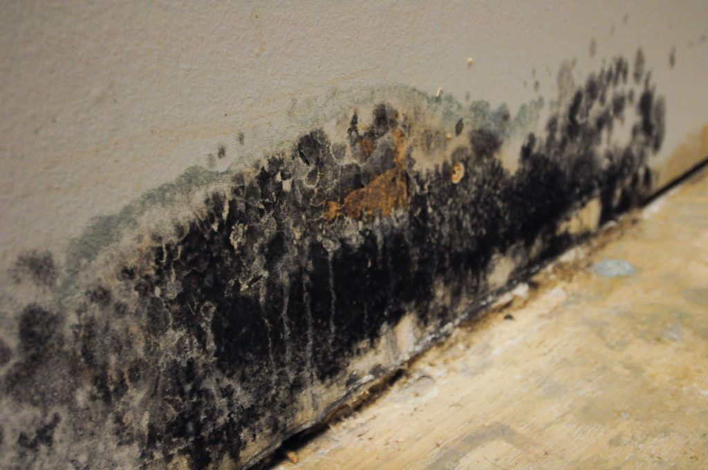 Mold Removal in Idyllwild-Pine Cove, CA (7283)